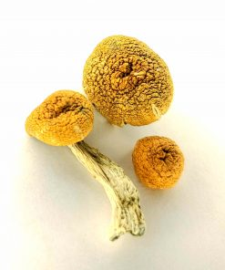 Buy Shrooms Online in Canada | Magic Mushrooms Dispensary